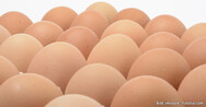 Fipronil in chicken eggs: status and background